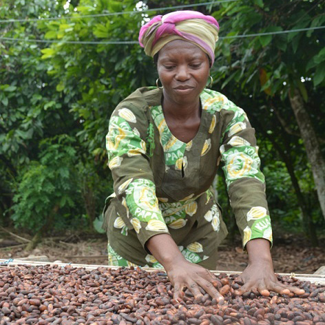 has fairtrade helped cocoa farmers in [pacific-region farmers earned $21 million in fairtrade revenue in 2014 more than 3000 fairtrade products are sold in australia and new zealand] fairtrade certification actively supports producers in developing countries through importing and retailing their products.